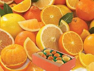 honeybell-oranges-grapefruit