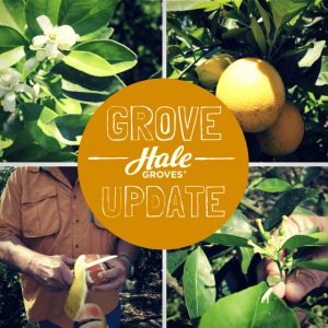 hale-groves