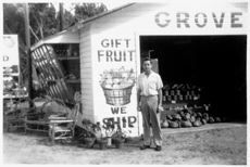 Florida honeybells, ruby red grapefruit, navel oranges, and fruit gift baskets from Indian River, Florida.