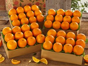 4 Trays of Navel Oranges, Approx. 36 lbs.