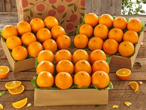 3 Trays of Navel Oranges, Approx. 27 lbs.