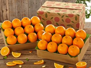 2 Trays of Navel Oranges, Approx. 18 lbs.