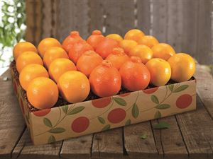 Hale Groves Honeybells and Navel Oranges