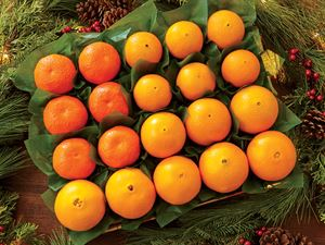 Orange Extravaganza