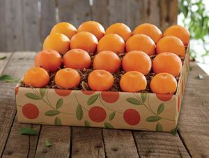 Orange SUNsation
