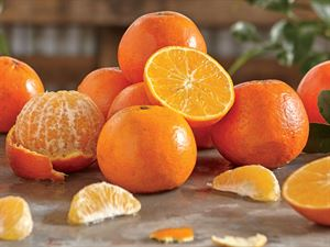 3 Trays Temple Oranges, Approx. 21 lbs.