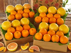 4 Trays Navel Oranges & Ruby Red Grapefruit, Approx. 36 lbs.