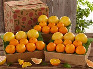 3 Trays Navel Oranges & Ruby Red Grapefruit, Approx. 27 lbs.