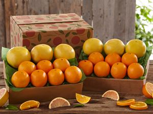 2 Trays Navel Oranges & Ruby Red Grapefruit, Approx. 18 lbs.