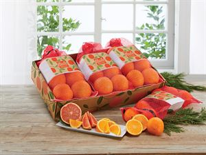 Farmstand Gift Bags - 3 bags, 6 Honeybells each bag