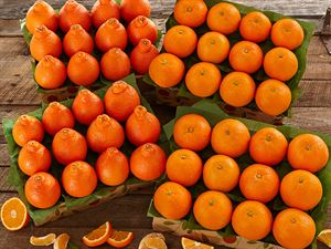 Honeybells and Navel Oranges