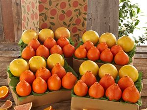 4 Trays, Honeybells & Ruby Red Grapefruit, Approx. 36 Pounds