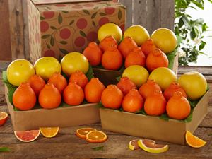 3 Trays Honeybells & Ruby Red Grapefruit, Approx. 27 Pounds