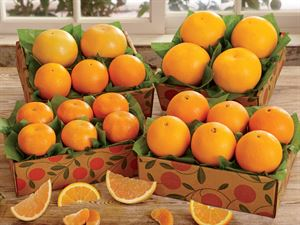 Citrus Sampler Trays