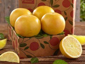 Sampler Tray of White Grapefruit