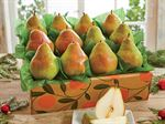 906-comice-pears_02.jpg
