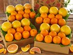 buy-navel-oranges-ruby-red-grapefruit-091919_01.jpg