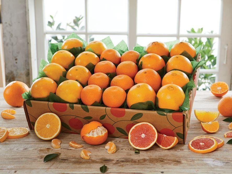 Spring Citrus Collection