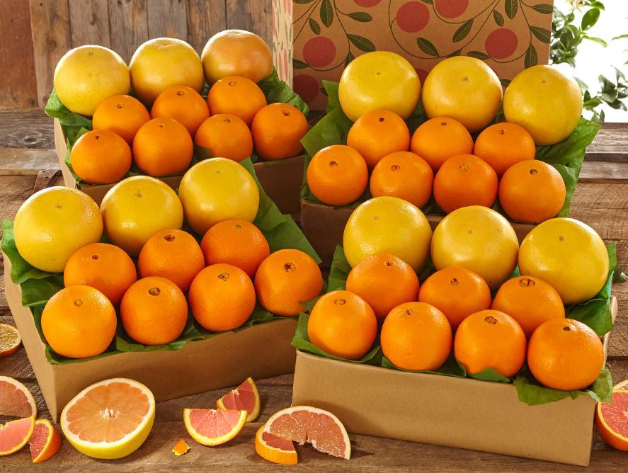 Cara Cara Navel Oranges & Ruby Red Grapefruit