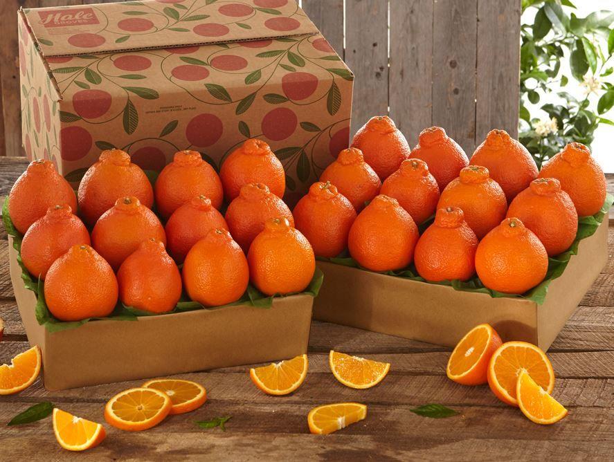Buy One Get One Free Honeybells - Hale Groves - Send Fruit