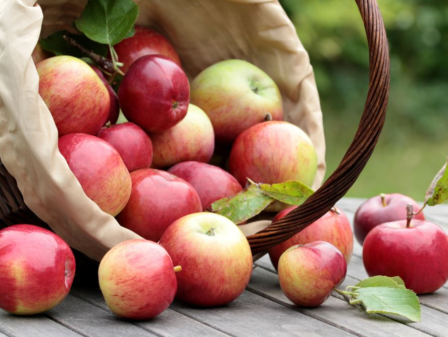 Hale Groves Fuji Apples