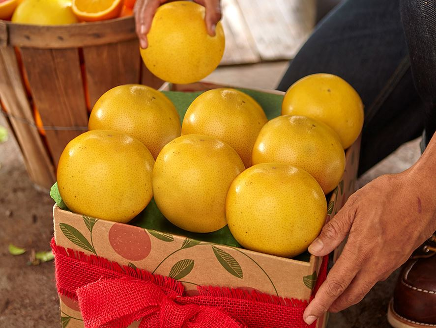 Citrus Lovers 3 Month Plan -Grapefruit