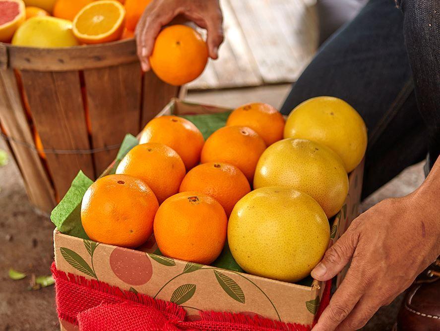 Citrus Lovers 8 Month Plan - Combo