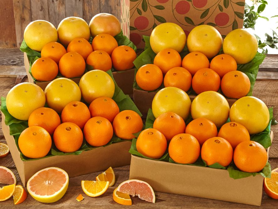4 trays navel oranges ruby red grapefruit hale groves