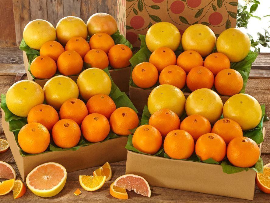 buy-navel-oranges-ruby-red-grapefruit-102820_01.jpg