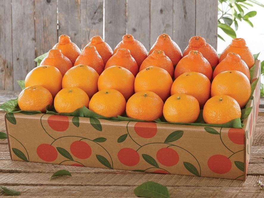 Hale Groves Honeybells, Navel Oranges, Tangerines