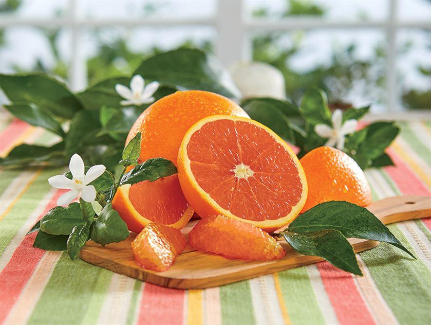 Buy Cara Cara Navel Oranges Online