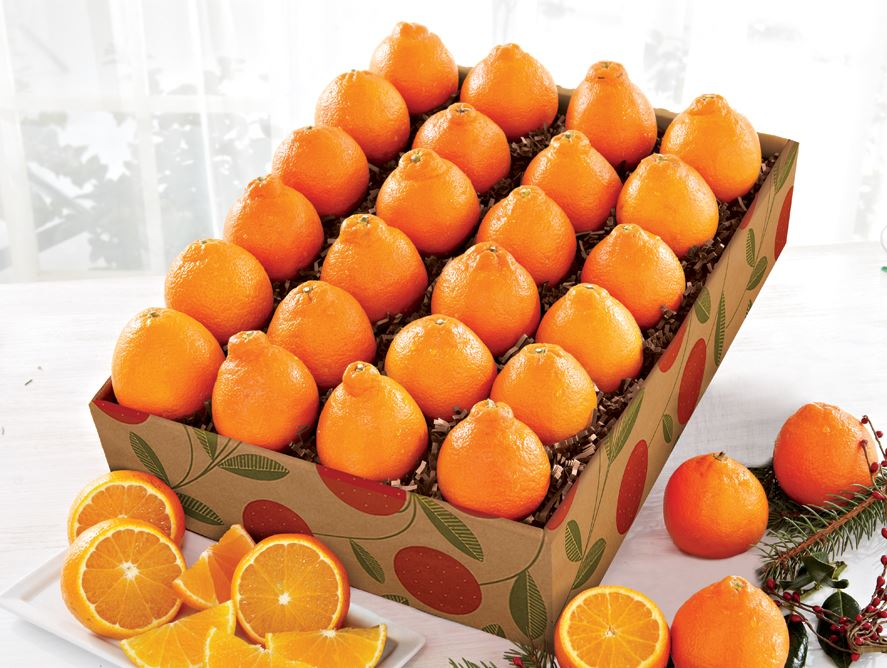24 snack size Honeybells from Hale Groves