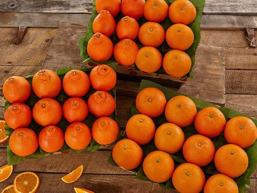 honeybells-oranges-101221_01.jpg