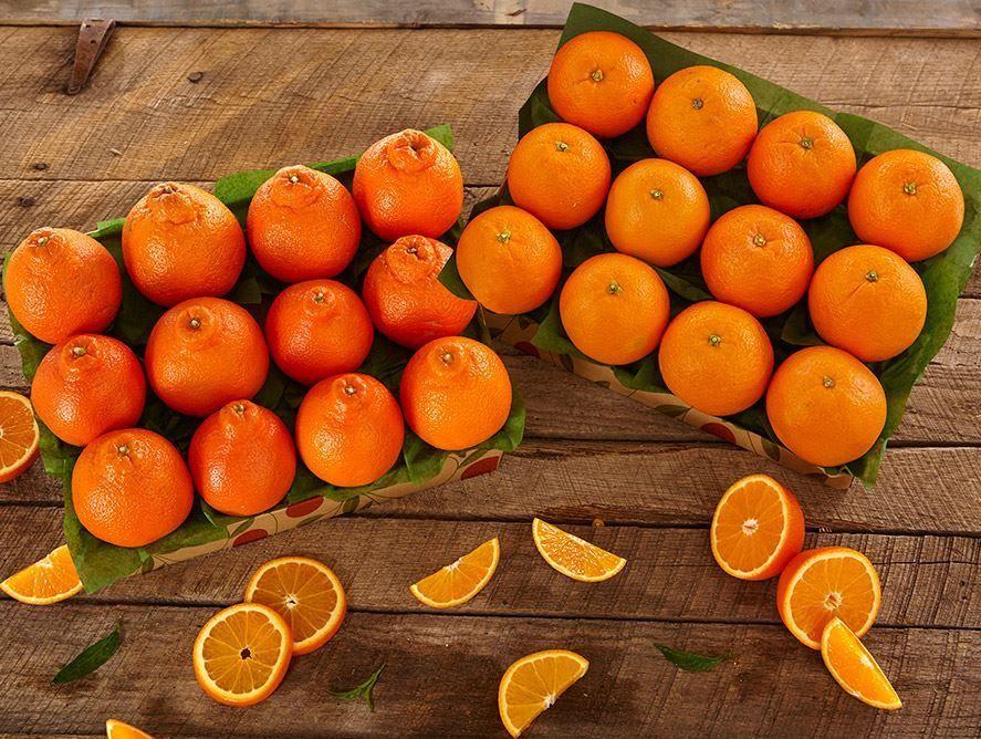honeybells-oranges-101221_02.jpg