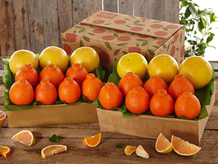 Buy 1 Get 1 Free - Hale Honeybells & Regent Ruby Red Grapefruit - Hale Groves - Send Fruit